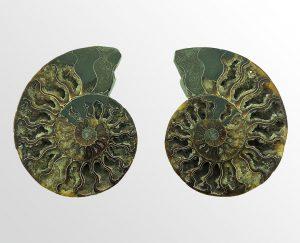 Ammonieten - relatie geschenken - Collectie Circles Art&Jewelry - Zwijndrecht
