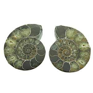 0Ammonieten doorgezaagd - gepolijst - Circles Art&Jewelry - Zwijndrecht