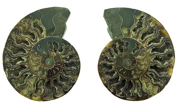 Ammonieten doorgezaagd - Circles Art&Jewelry - Zwijndrecht