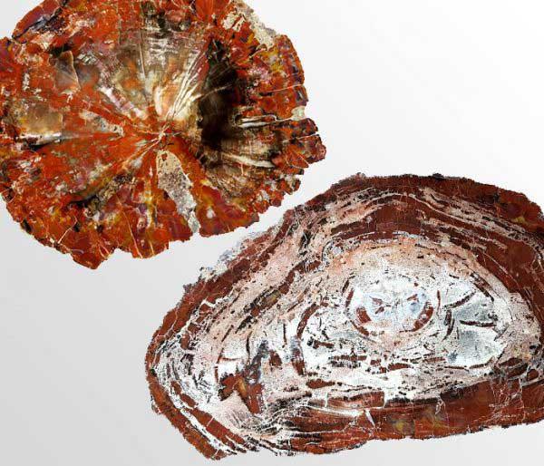 Versteend hout uit Arizona - Circles Art&Jewelry - Zwijndrecht
