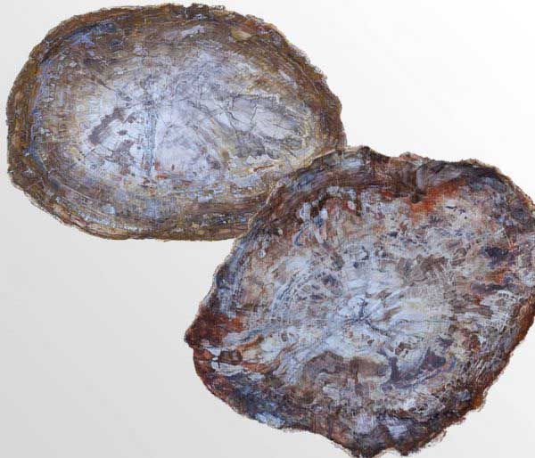 Petrified Wood uit Madagascar - Circles Art&Jewelry - Zwijndrecht