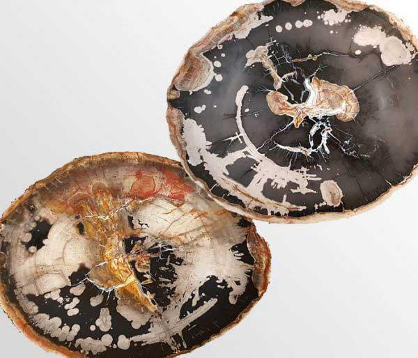 Versteend hout uit Indonesië, ca 20 miljoen jaar oud - Circles Art&Jewelry - Zwijndrecht