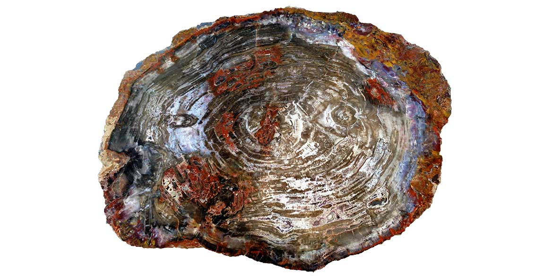 Versteend hout - Arizona - Circles Art&Jewelry - Zwijndrecht