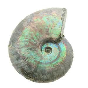 Ammoniet - met geopaliseerd effect - Circles Art&Jewelry - Zwijndrecht