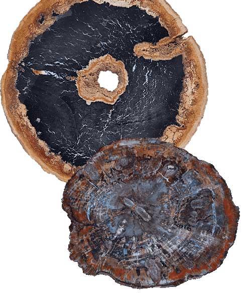 Versteend hout - Circles Art&Jewelry - Zwijndrecht