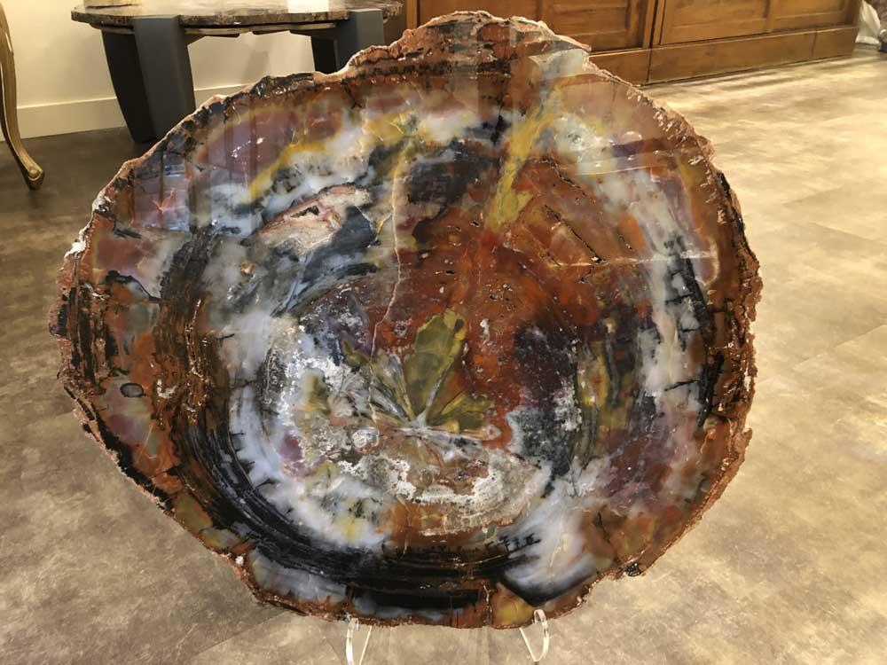 Plaat versteend hout met vele prachtige kleuren - collectie Circles Art&Jewelry - Zwijndrecht